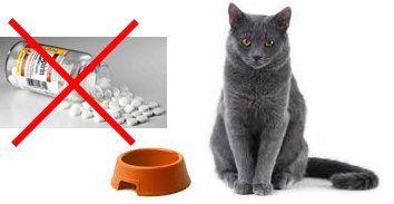 ефикасна отрова за котки